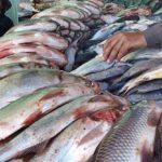 জেনে নিন বাজার থেকে কেনা মাছকে কিভাবে ফর্মালিন মুক্ত করবেন