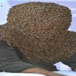চার ঘণ্টা মুখে মৌমাছির ঝাঁক, গিনেস বুকে নাম তুললেন কেরলের যুবক