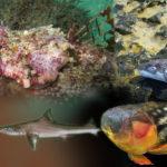 সুন্দরবনে আবিষ্কার ১০ প্রজাতির নতুন মাছ, খুশির হাওয়া বিজ্ঞানীমহলে