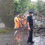 মুম্বাইয়ে শুরু হল নিসর্গের তাণ্ডব, উপড়ে পড়ল গাছ ও ল্যাম্পপোস্ট, উদ্ধারে NDRF