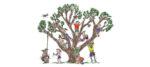 শিশুদের গাছপালা সম্পর্কে পাঠদানের উদ্দেশ্যে মধ্যপ্রদেশের কটনীতে অনলাইন প্রতিযোগিতা