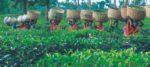 করোনা আবহের মধ্যেও পুজোর বোনাস পাবেন উত্তরবঙ্গের চা বাগানের শ্রমিকরা