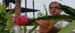 সবুজায়নের ডাকে বাড়ির ছাদেই সবজি চাষ সিউড়িতে